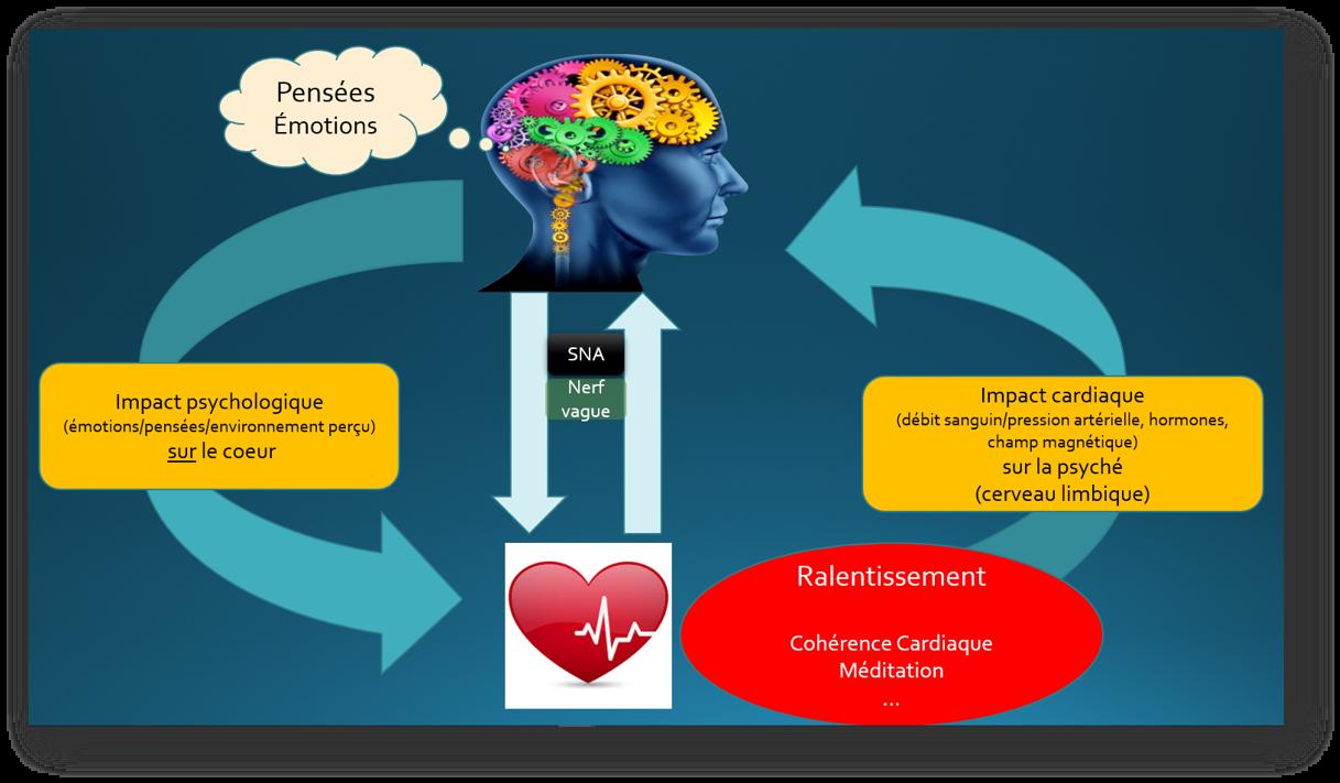 liaison coeur cerveau